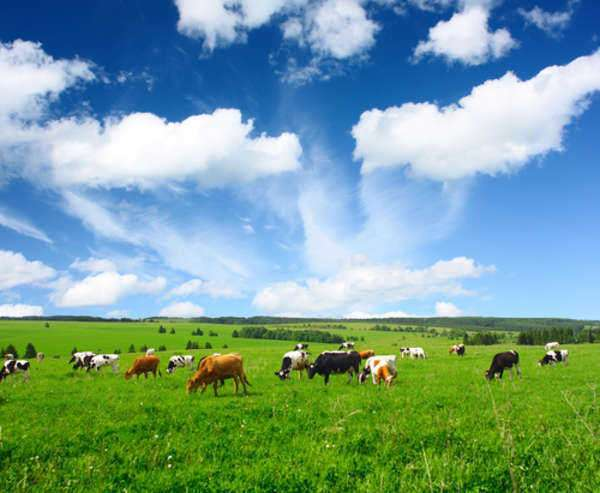 A Brief Overview of Land Descriptions